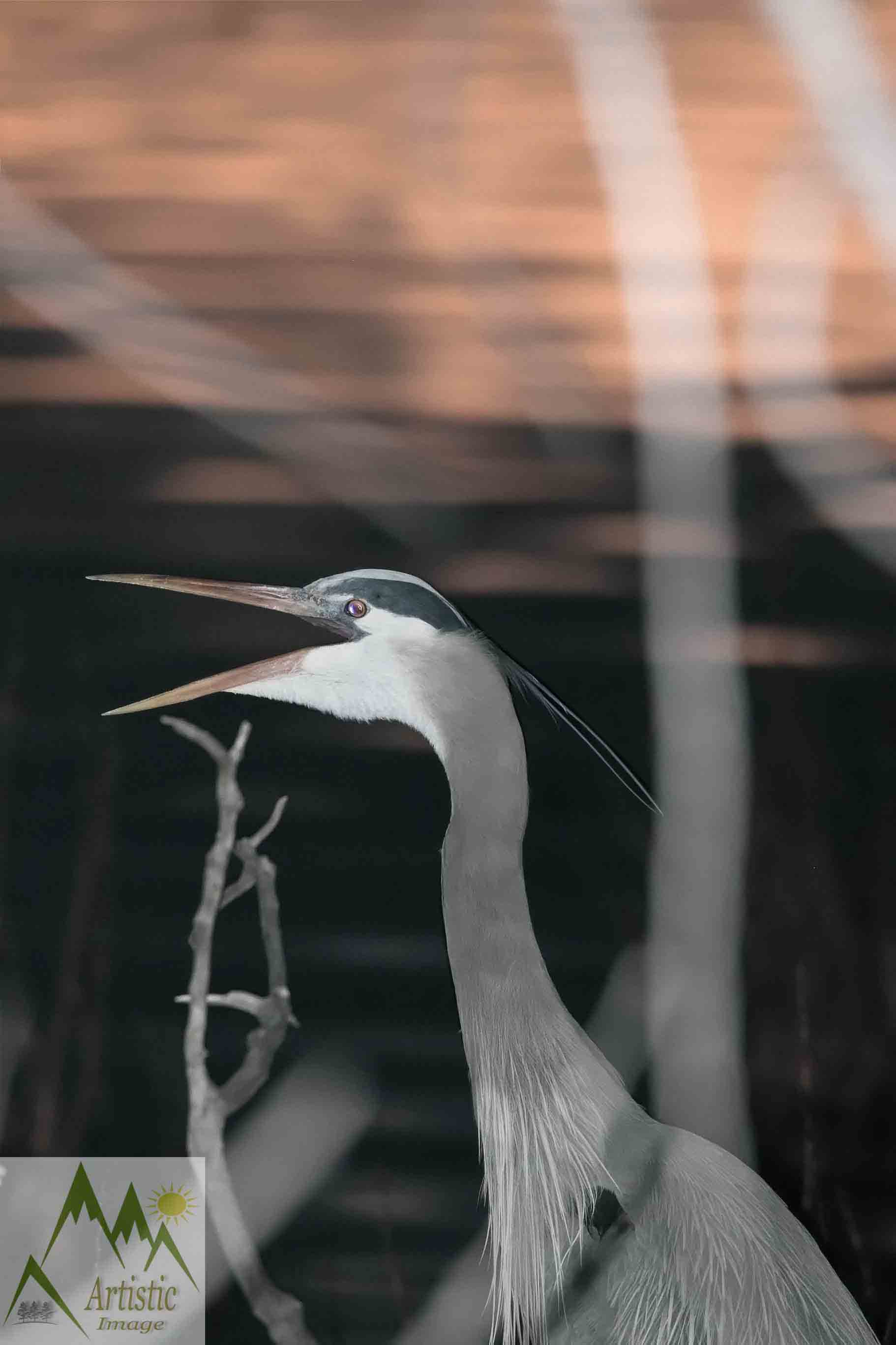 Blue Heron Speaks
