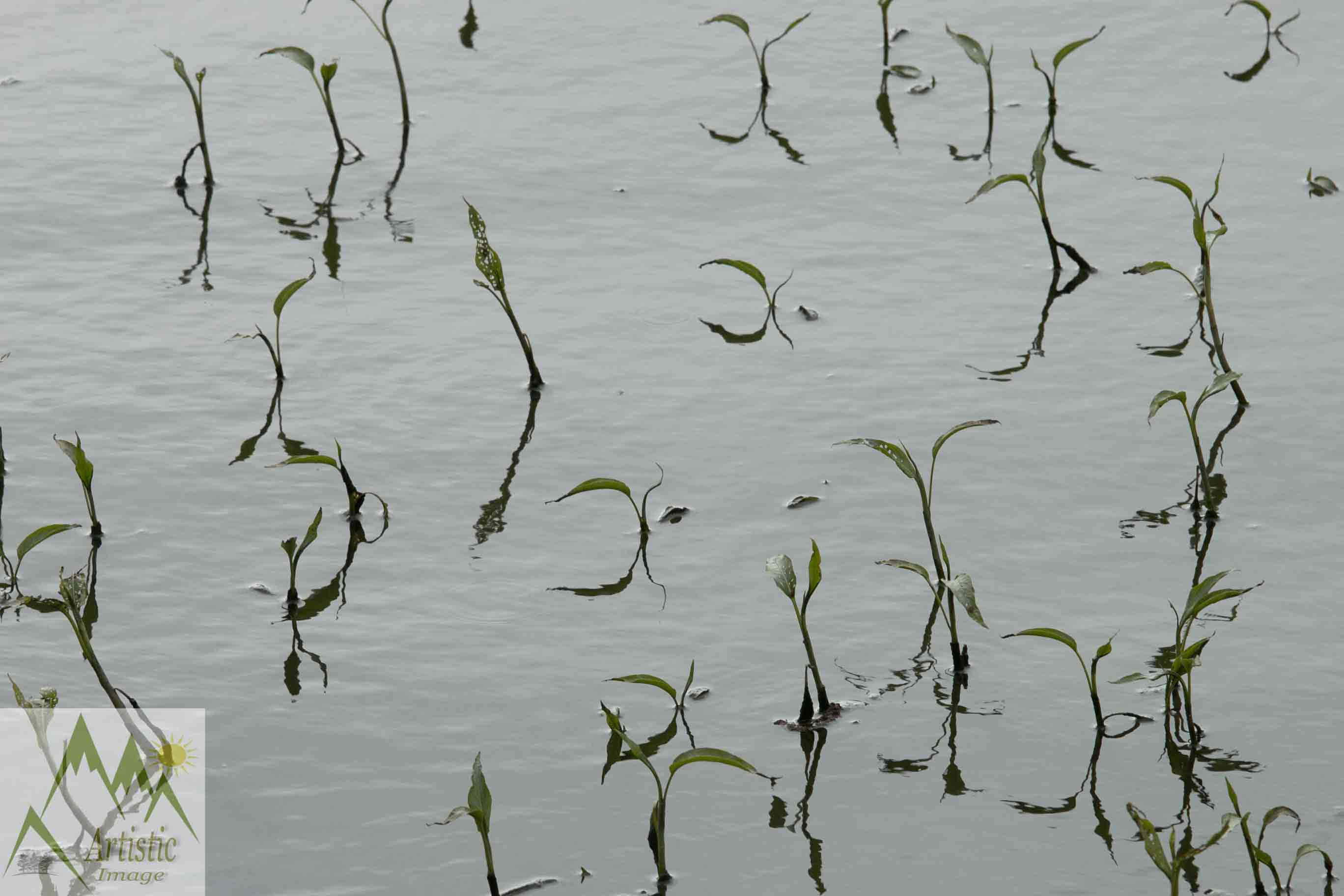 Plants in Water